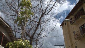 Árvore compromete segurança do bairro Esplanada.00_00_53_21.Quadro003